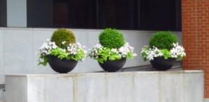 3 Pots of Flowers