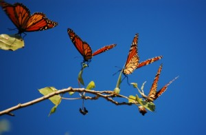 Best Tweets 111811 Butterflies in Formation