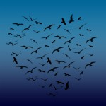 Best Tweets 21712 Heart-Shaped Birds in Flight