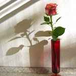 Best Tweets 042012 Rose and Shadow